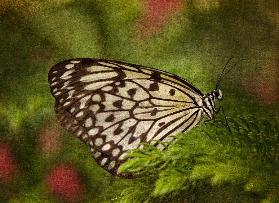 Butterfly Photograph - Rice Paper Butterfly 2 by Joann Vitali