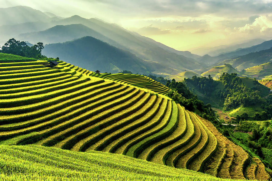 Rice Terraces At Mu Cang Chai , Vietnam Photograph by Chan Srithaweeporn