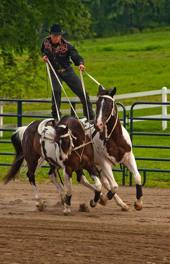 Cowboy Photograph - Ride Them Cowboy by Karol Livote