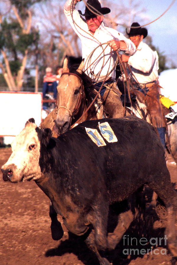 Rodeo Photograph - Riding And Roping by Thomas R Fletcher