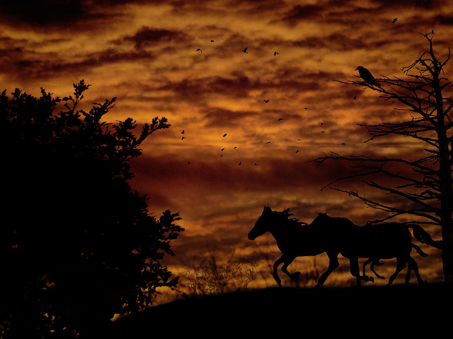 Horses Photograph - Riding Into The Night by Diane Schuster