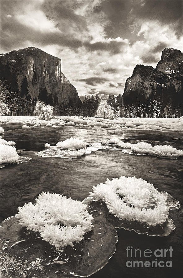 North America Photograph - Rime Ice On The Merced In Black And White by Dave Welling
