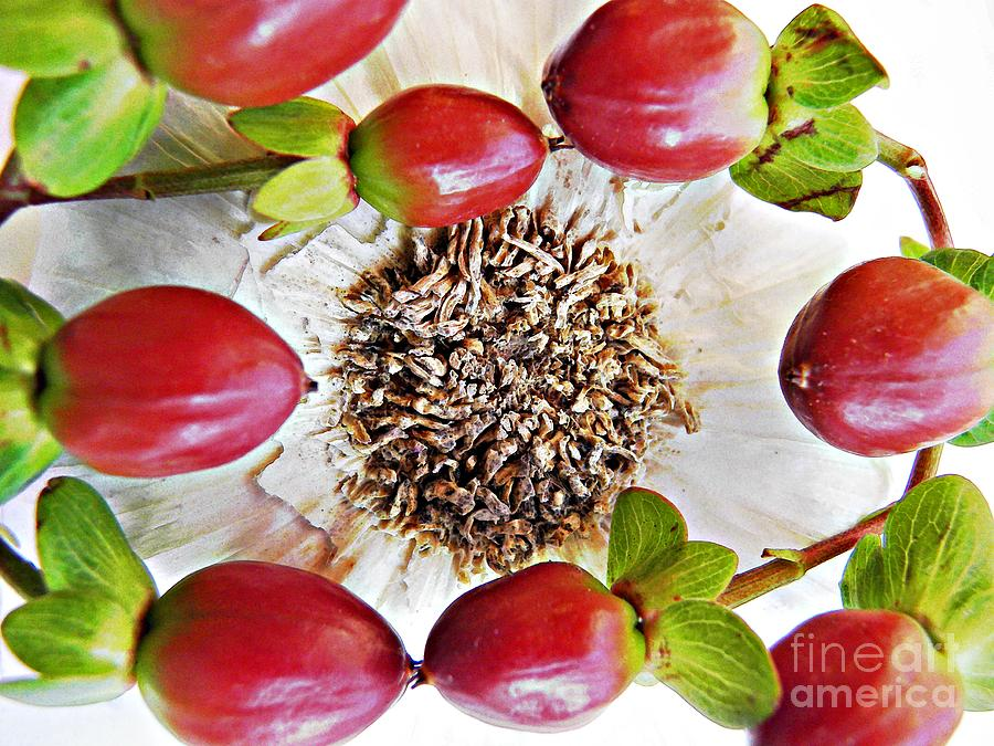 Garlic Photograph - Ring Around The Garlic by Sarah Loft