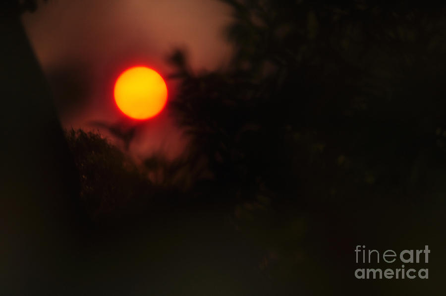 Ring Of Fire Photograph - Ring Of Fire - Eerie Bushfire Sunset by Kaye Menner