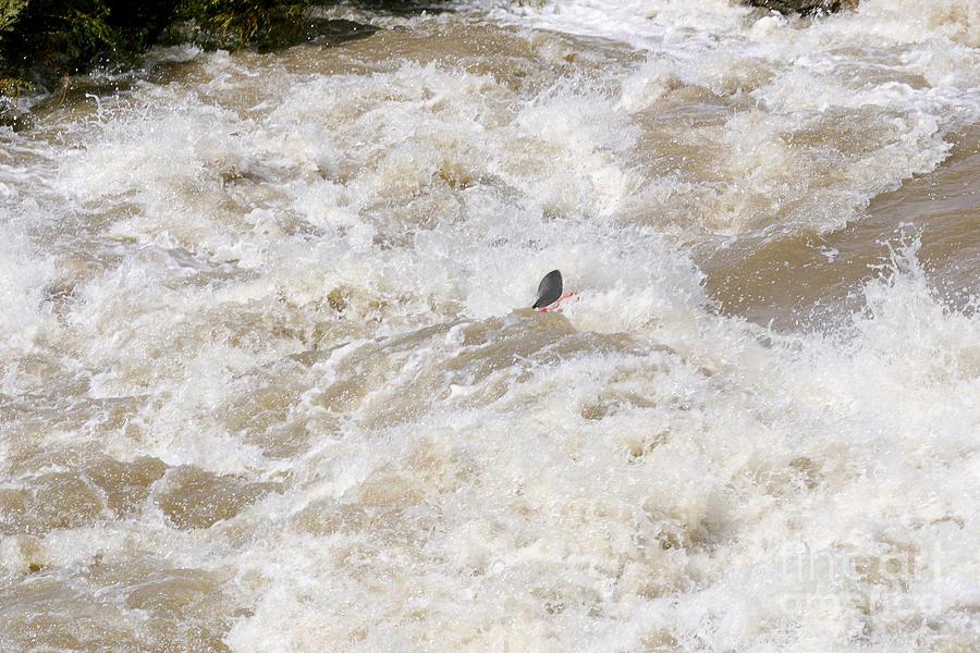 Rio Grande Photograph - Rio Grande Kayaking by Steven Ralser