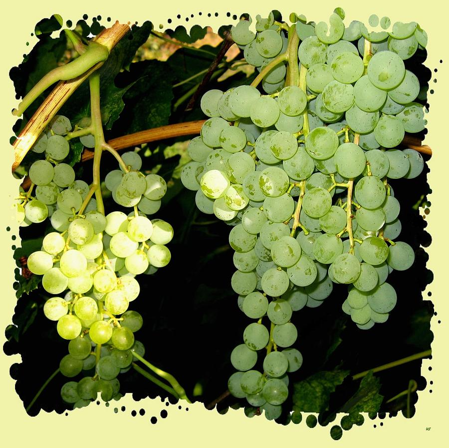 Green Grapes Photograph - Ripe On The Vine by Will Borden
