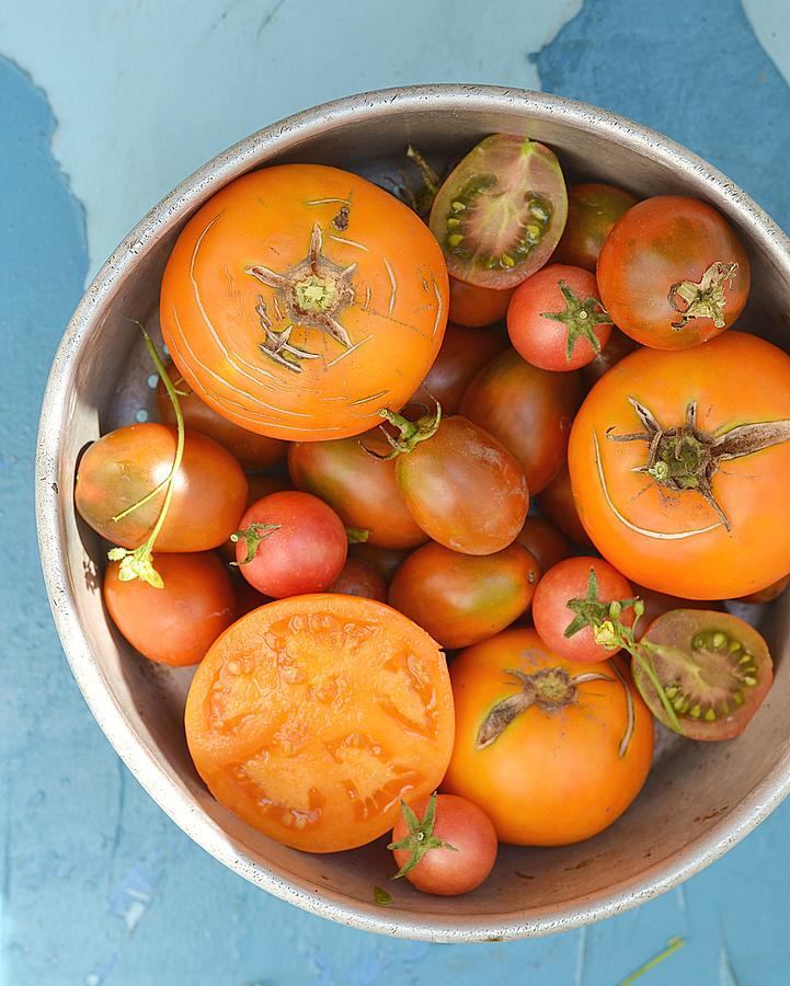 Ripe  Tomatoes Photograph by Zoryana Ivchenko
