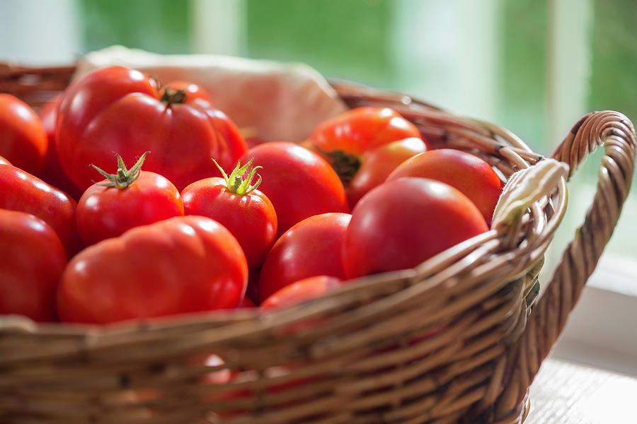 Ripening Tomatoes Closeup Photograph by Cglade