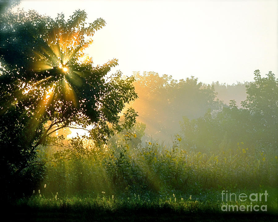 Color Photography Photograph - Rise And Shine by Sue Stefanowicz
