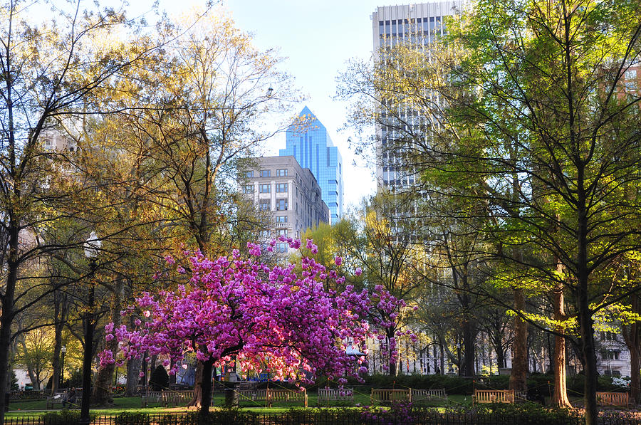 Rittenhouse Photograph - Rittenhouse Square In Springtime by Bill Cannon
