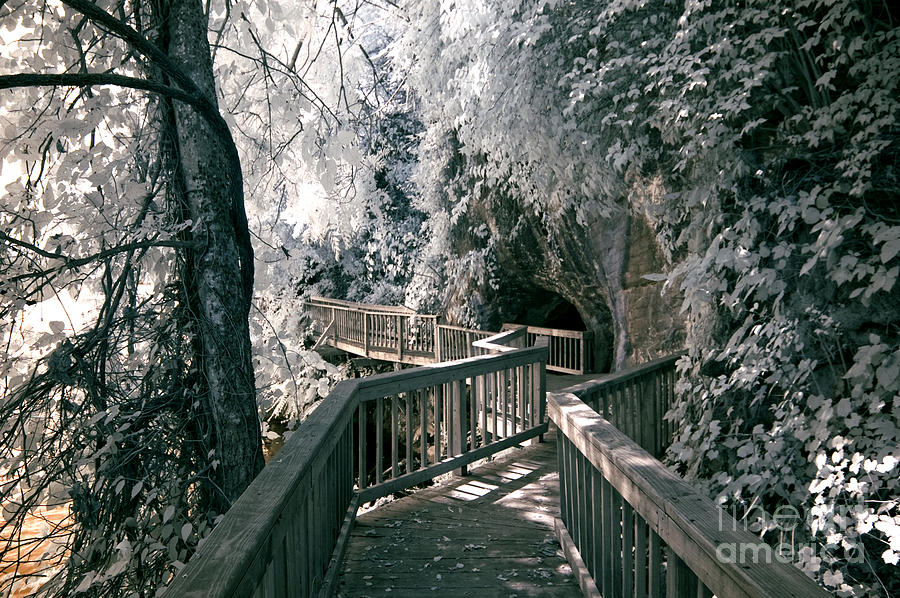 Infrared Photograph - River Boardwalk by Paul W Faust -  Impressions of Light