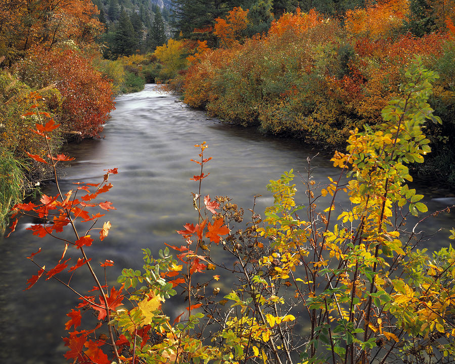 Autumn Photograph - River Color by Leland D Howard