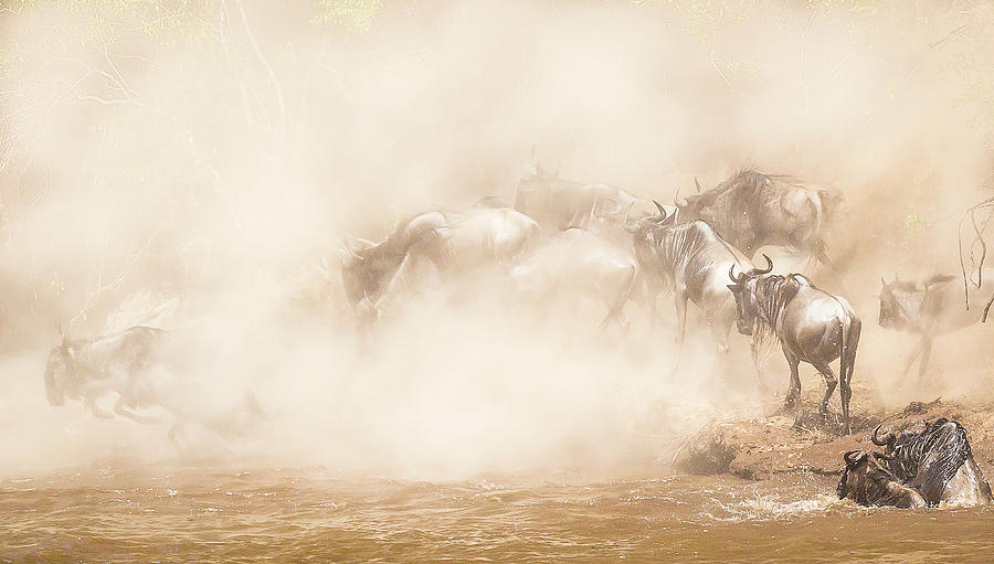 Africa Photograph - River Crossing by Eunice Kim