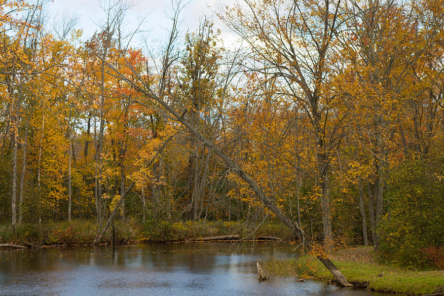 Tree Photograph - River In Autumn by Rhonda Humphreys