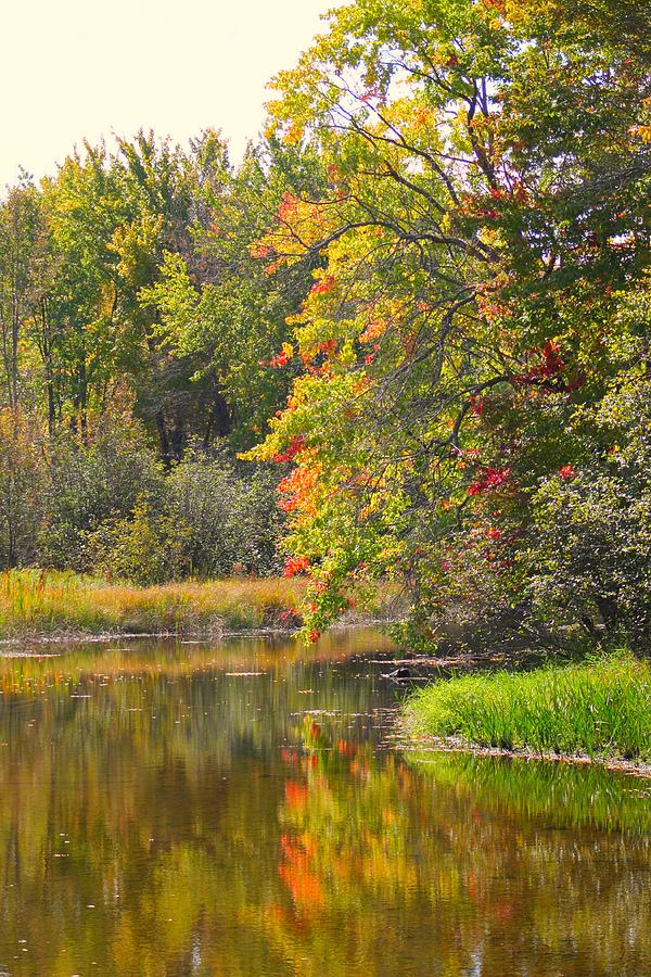 River Photograph - River In Fall by Rhonda Humphreys