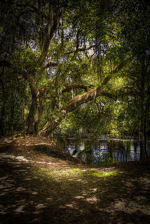 Oak Tree Photograph - River Oak by Marvin Spates