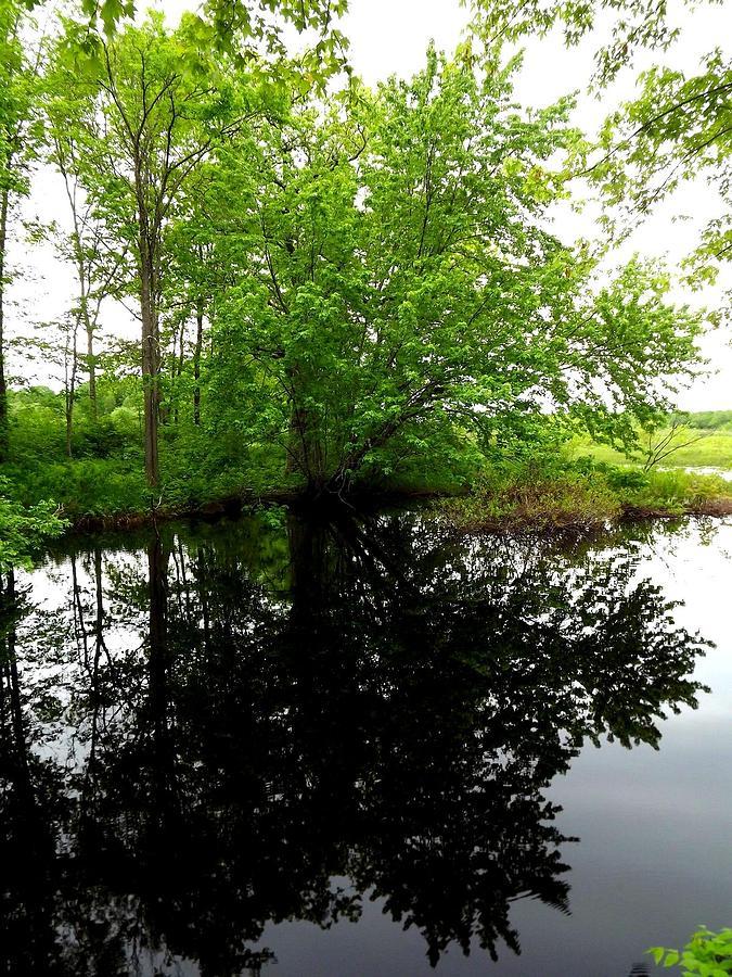 River Photograph - River Reflections by Dancingfire Brenda Morrell