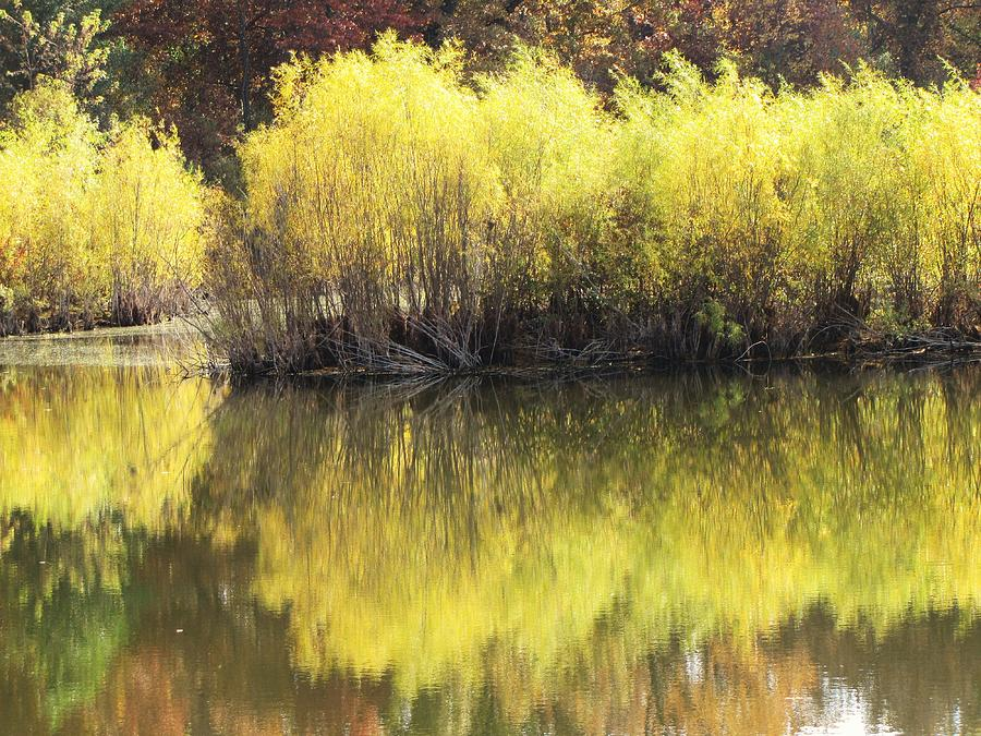 Trees Photograph - River Willow Reflections by Lori Frisch