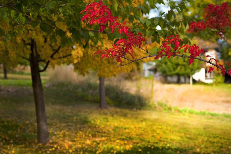 Autumn Photograph - Riverbend Orchard by Theresa Tahara