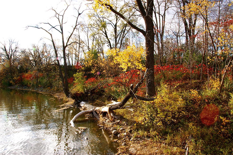 Riverfront Photograph - Riverfront In Fall by Jocelyne Choquette