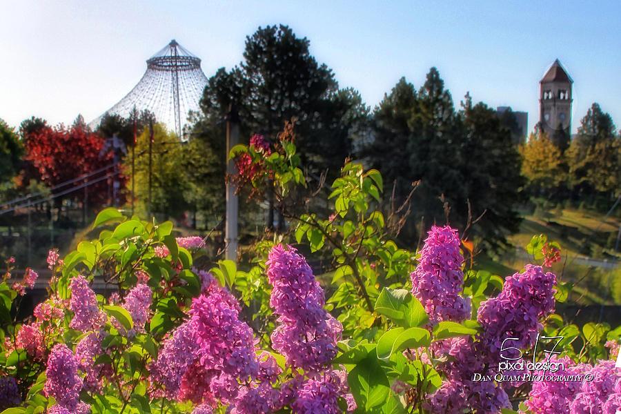 Spokane Wa Photograph - Riverfront Park Lilac by Dan Quam