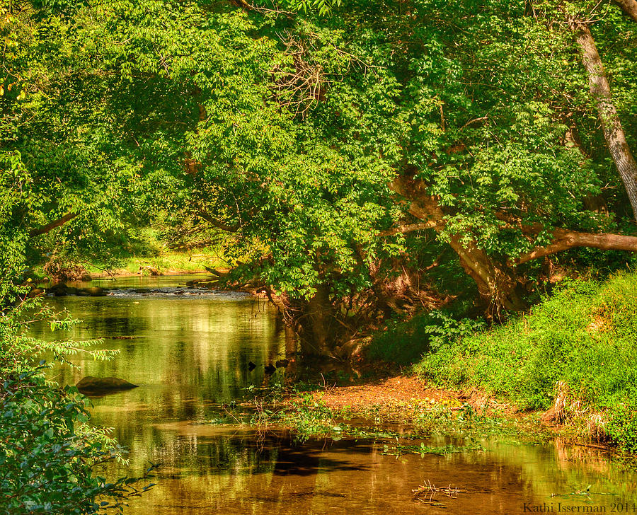 Forest Photograph - Rivers Bend by Kathi Isserman