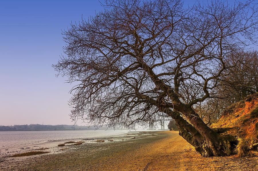 Bay Photograph - Riverside by Svetlana Sewell