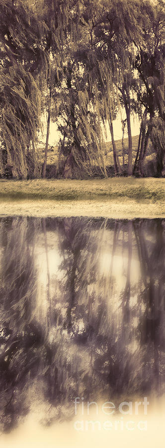 Trees Photograph - Riverside Trees by HD Connelly