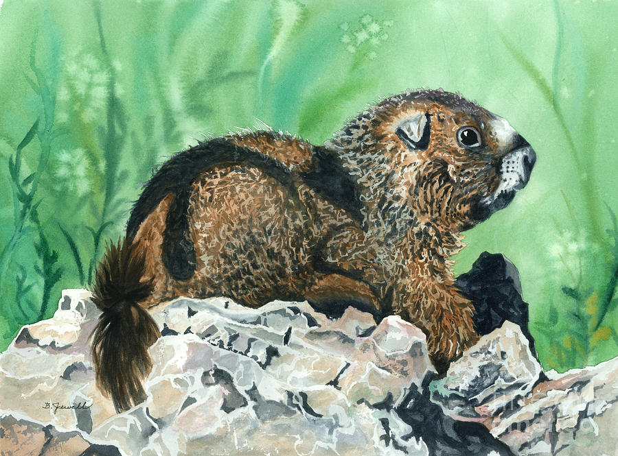 Marmot Painting - Rmbl Marmot by Barbara Jewell