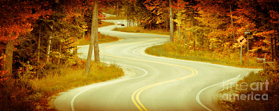 Door County Photograph - Road Bending Through The Trees by Ever-Curious Photography
