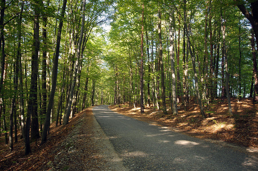 Asphalt Photograph - Road In Forest  by Ioan Panaite