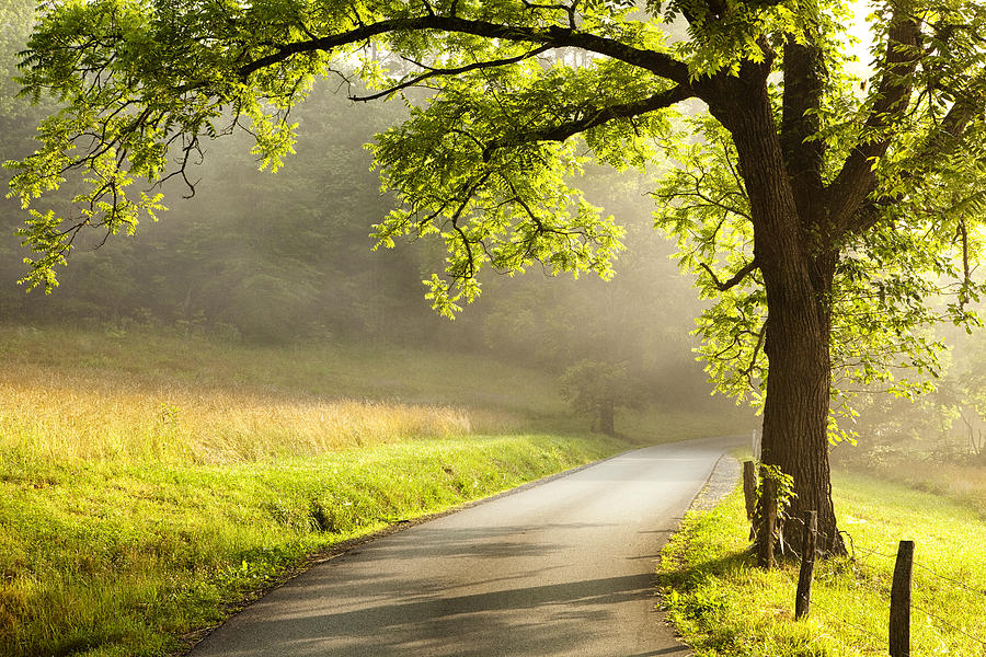Tree Photograph - Road In The Woods by Andrew Soundarajan