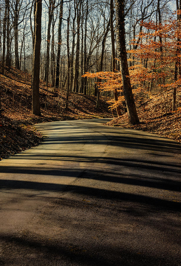 Fine-art Photograph - Road Into The Woods by Diana Boyd