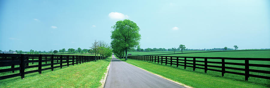 Horizontal Photograph - Road Passing Through Horse Farms by Panoramic Images