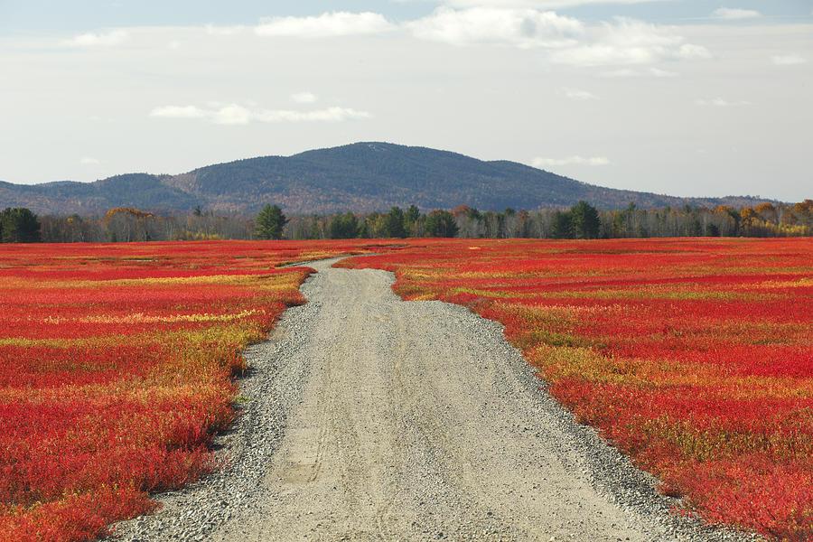 Road Through Autumn Blueberry Maine Photograph by Scott Leslie
