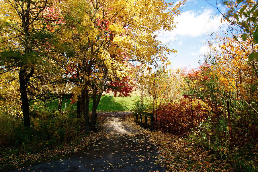 Road Photograph - Road To Happyness by Jocelyne Choquette