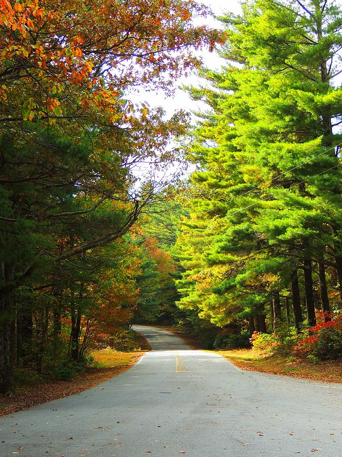 Fall Photograph - Road To The Chapel by Judy  Waller