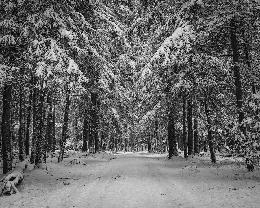 Winter Photograph - Road To Winter by Brian Young