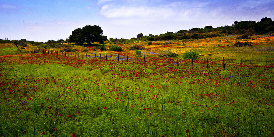 Texas Photograph - Roadside Flowers by Tamyra Ayles