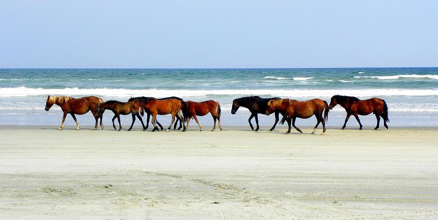 Wild Spanish Mustang Photograph - Roaming Wild And Free by Kim Galluzzo Wozniak
