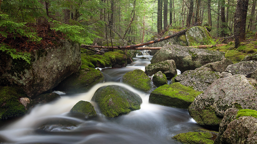 Maine Photograph - Roaring Brook by Patrick Downey