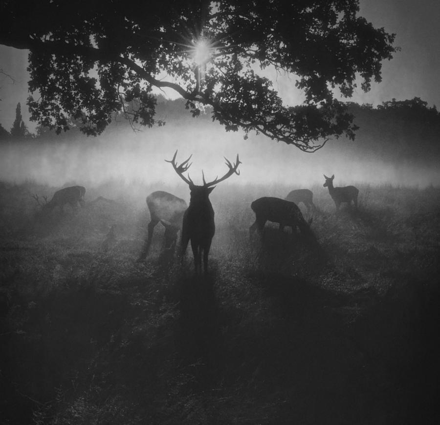 Fog Photograph - Robin Hood Woods by Robert Fabrowski