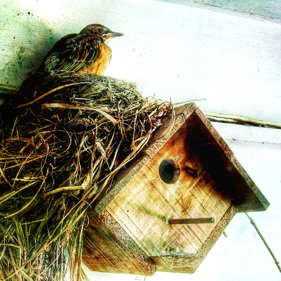 Robin Nest On Wren House Digital Art