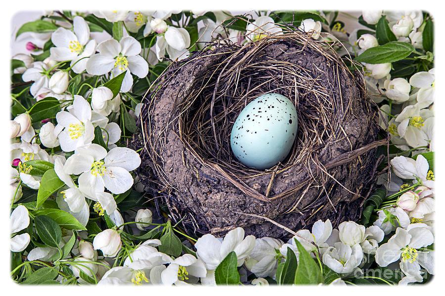 Apple Photograph - Robins Nest by Edward Fielding