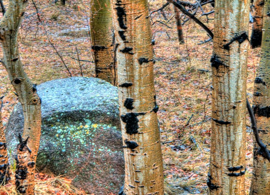 Tree Photograph - Rock and Aspens 14388 by Jerry Sodorff