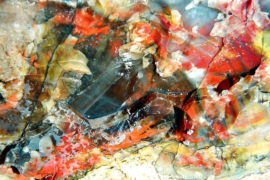 Petrified Wood Photograph - Rock Kaleidascope by Frank Townsley