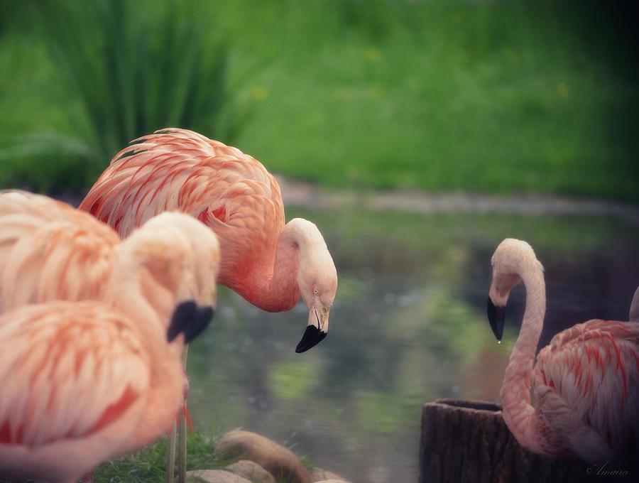 Wildlife Photograph - Rocking Pink by Maria Angelica Maira