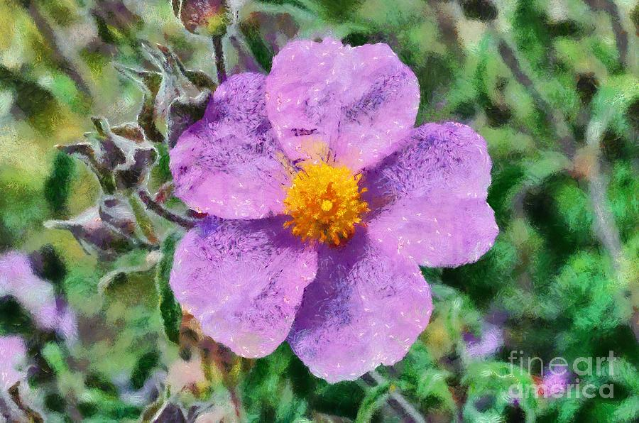 Rockrose Wild Flower Painting by George Atsametakis