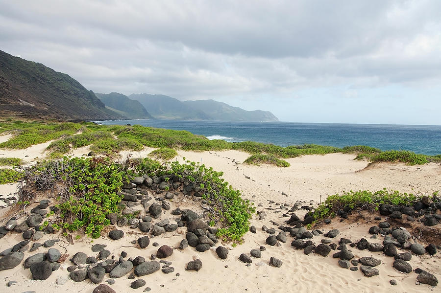 Rocks And Greenery In The Sand Leading Photograph by Brandon Tabiolo / Design Pics