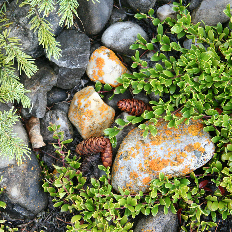 Rocks Photograph - Rocks And Lichen by Karen Lindquist